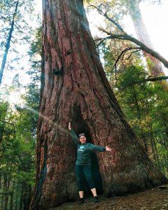 belknap giant sequoia