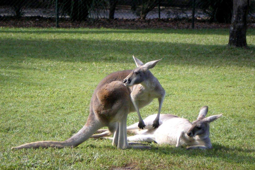 studying abroad Brisbane zoo