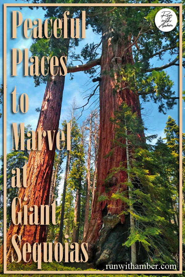 Places to marvel at Giant sequoias run with amber