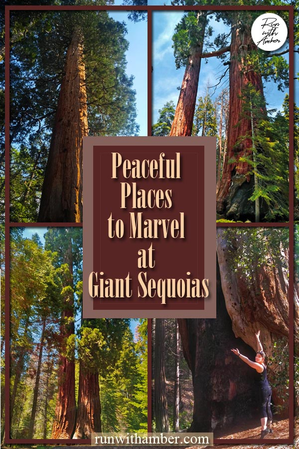 PLaces to marvel at Giant sequoias
