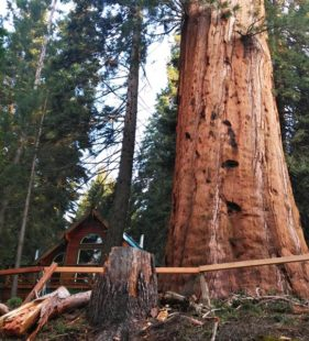 3 Unexpected Peaceful Places to Marvel at Giant Sequoias